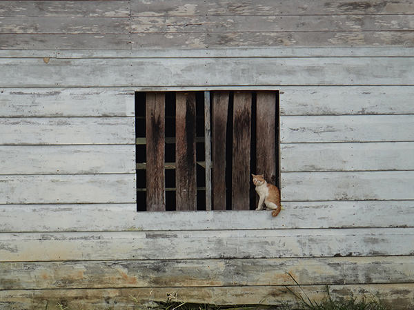 Quiet Times #2 by Jeremy Chin - Cat on Window Sill, in Bario, Sarawak