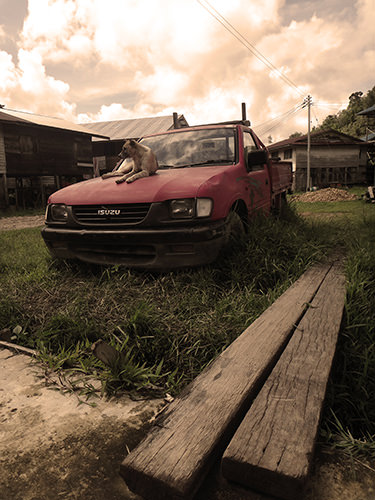 Quiet Times #3 by Jeremy Chin - Dog on Abandoned Truck, in Bario, Sarawak