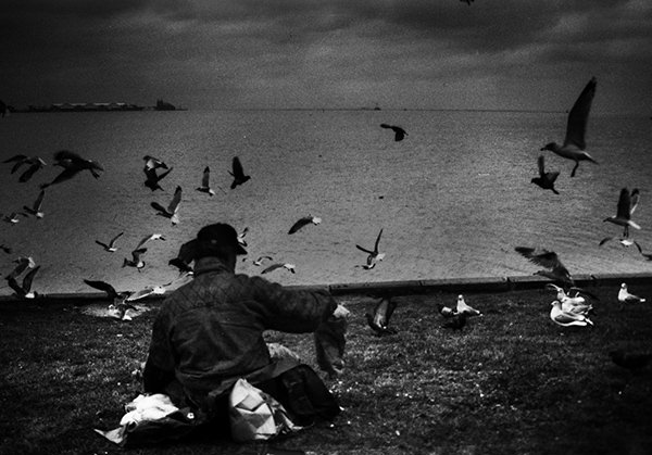 Quiet Times #48 by Jeremy Chin - Man Feeds The Birds By The Lake, Vancouver Canada