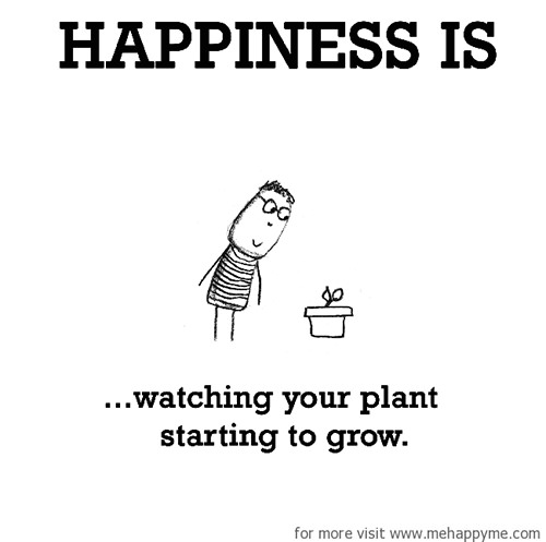 Happiness #245: Happiness is watching you plant starting to grow.