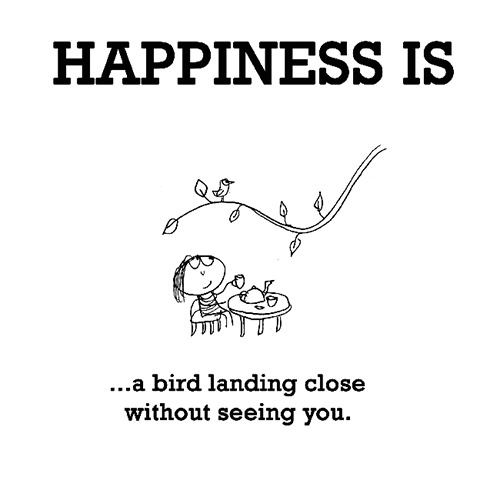 Happiness #522: Happiness is a bird landing close without seeing you.