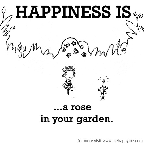 Happiness #617: Happiness is a rose in your garden.