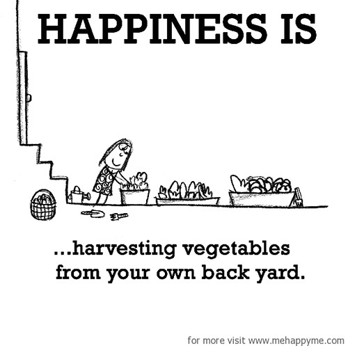 Happiness #690: Happiness is harvesting vegetables from your own back yard.