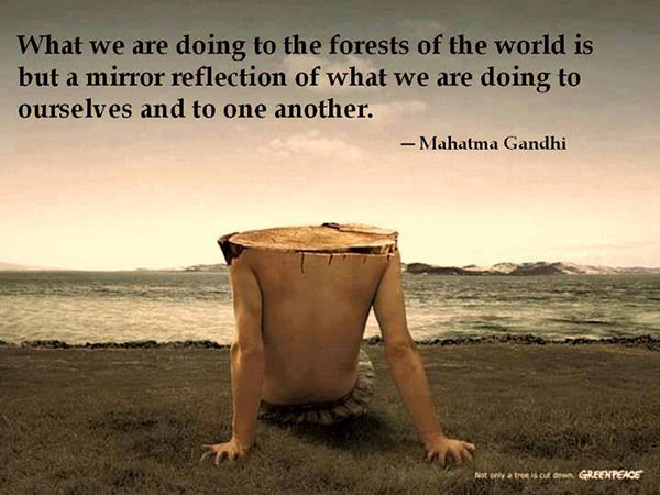 Hard Truths #49: What we are doing to the forests of the world is but a mirror reflection of what we are doing to ourselves and to one another.