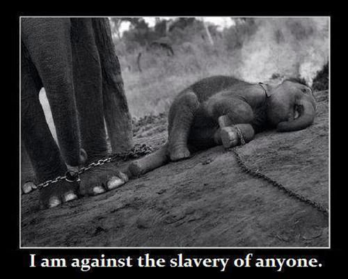 Save Our Planet #16: I am against the slavery of anyone.