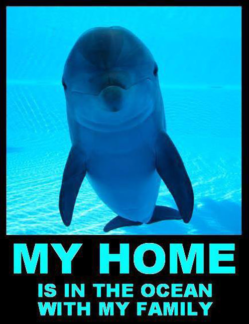 Save Our Planet #19: My home is in the ocean with my family.