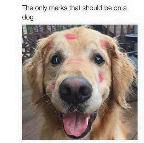 Save Our Planet #52: The only marks that should be on a dog.