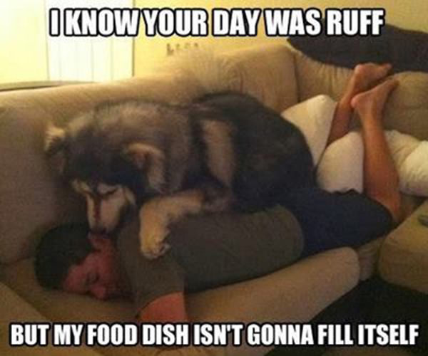 Tickled #234: Dog dish ain't gonna fill itself