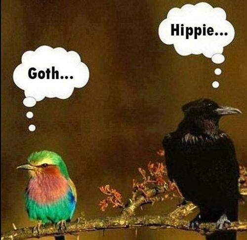 Tickled #257: Goth. Hippie.