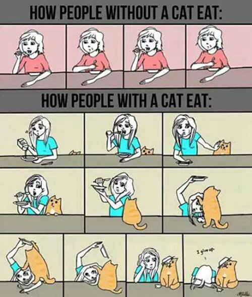 Tickled #391: How Cat People Eat
