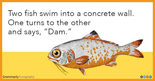Tickled #446: Two fish swim into a concrete wall. One turns to the other and says,