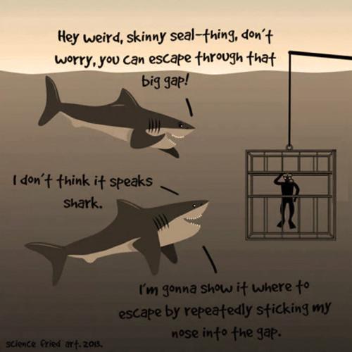 Tickled #517: Shark Humor