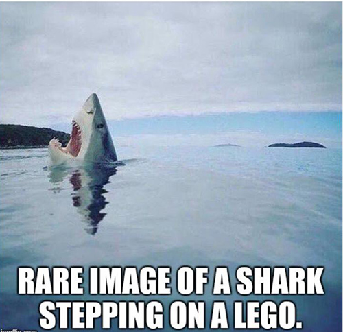 Tickled #677: Rare image of a shark stepping on a Lego.