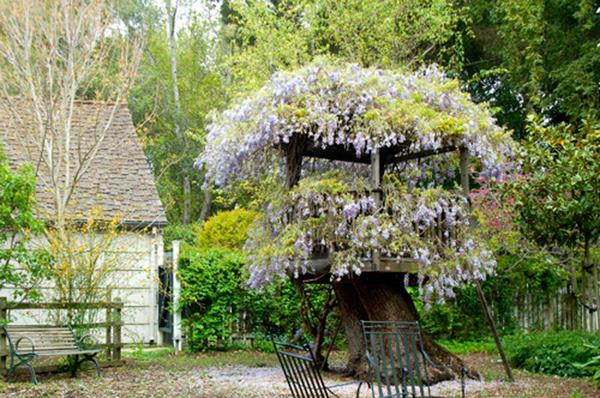 Treehouses #4: