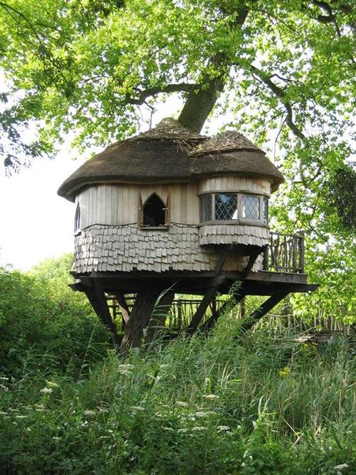 Treehouses #20: