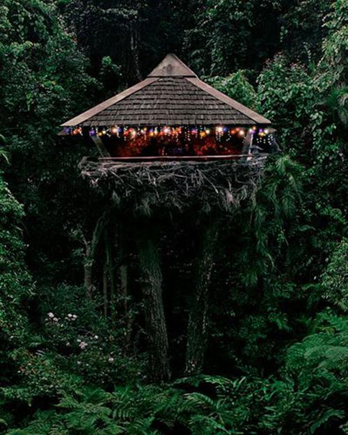 Treehouses #24: