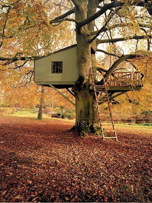 Treehouses #26:
