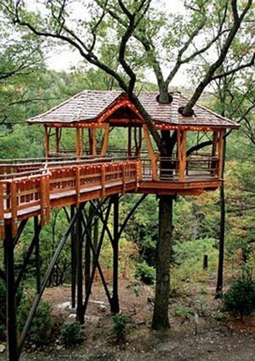 Treehouses #27:
