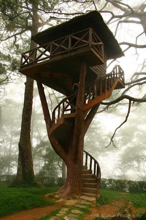 Treehouses #32: