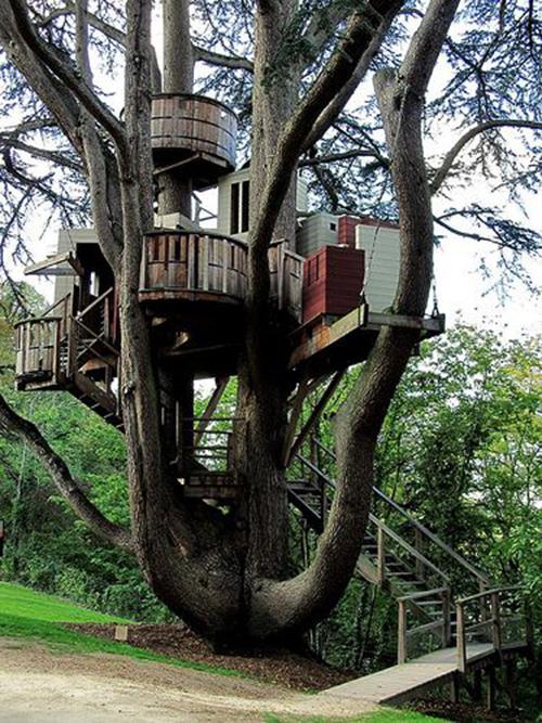 Treehouses #33: