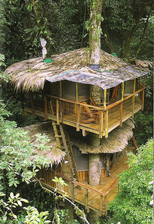 Treehouses #48: