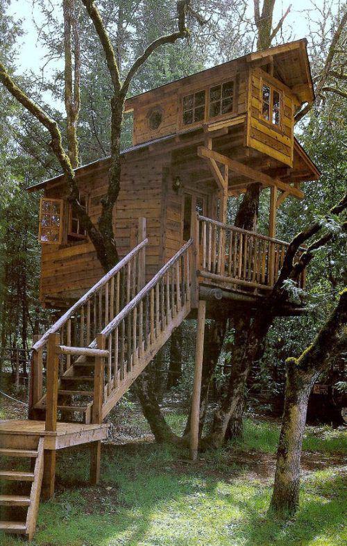 Treehouses #49: