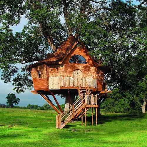 Treehouses #53:
