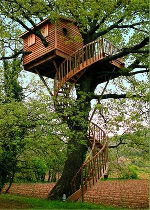Treehouses #55: