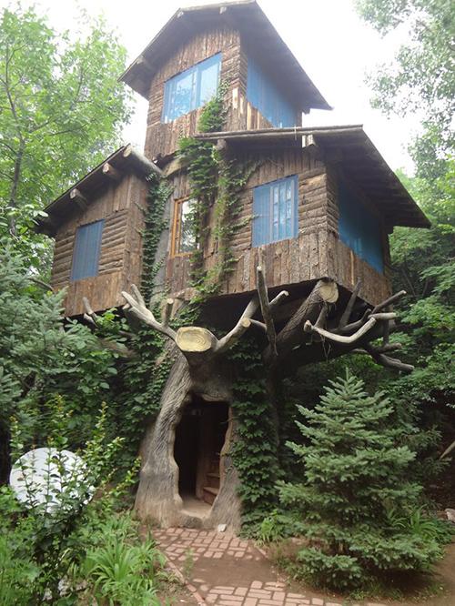 Treehouses #58: